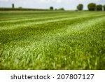 great green grass field on a... | Shutterstock . vector #207807127