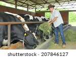 farmer feeding cows on farm | Shutterstock . vector #207846127