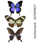 three  butterflies  isolated on ... | Shutterstock . vector #207849817