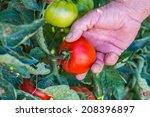 tomato harvest. farmers hands... | Shutterstock . vector #208396897
