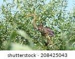 purple heron   ardea purpurea   ...   Shutterstock . vector #208425043
