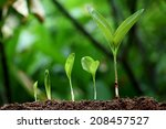 plant growth new life | Shutterstock . vector #208457527