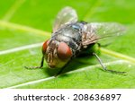 blow fly  carrion fly ... | Shutterstock . vector #208636897