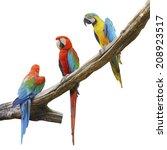 parrot bird sitting on the perch | Shutterstock . vector #208923517