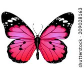 Vector Cartoon Pink Butterfly