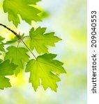 green leaves on the summer...   Shutterstock . vector #209040553