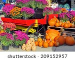 Chrysanthemums And Pumpkins Fo...