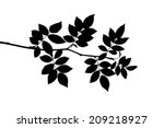 silhouette of leaves on a young ...