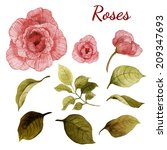 roses and leaves  watercolor ... | Shutterstock . vector #209347693