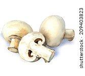 white mushroom isolated on... | Shutterstock . vector #209403823