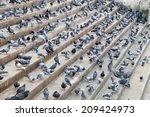 flock of pigeons | Shutterstock . vector #209424973