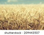 wheat field and sunny day   Shutterstock . vector #209443507