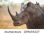 rhino with large horn cloe up... | Shutterstock . vector #209654227
