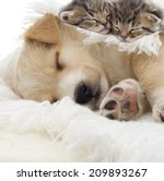 Stock photo kittens and puppy sleeping 209893267