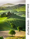 farm of olive groves and... | Shutterstock . vector #209897443