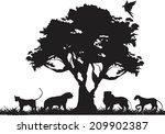 lions pride under tree