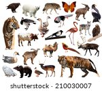 asian fauna. isolated on white  | Shutterstock . vector #210030007