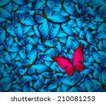 beautiful background with lot... | Shutterstock . vector #210081253