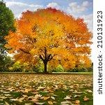 beautiful autumn trees. autumn... | Shutterstock . vector #210131923