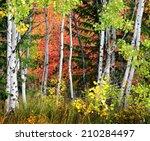 Autumn Foliage Including Birch...