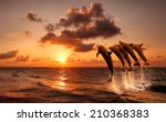 beautiful sunset with dolphins... | Shutterstock . vector #210368383
