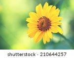 Cute Yellow Summer Flower