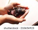 newborn puppy | Shutterstock . vector #210656923