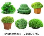 Collage Green Bushes Isolated...