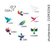Colorful Colibri. Hummingbirds...