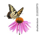 Swallowtail Butterfly And...