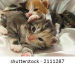 Kittens   3 Weeks Old