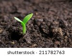 small green seedling in the... | Shutterstock . vector #211782763