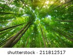 into the forest. nature... | Shutterstock . vector #211812517