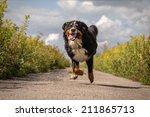 Happy Dog Jumping Running At...