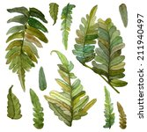 watercolor set of green fern... | Shutterstock . vector #211940497