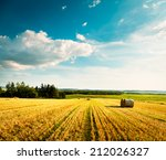 summer landscape with mown