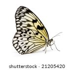 idea leuconoe butterfly in... | Shutterstock . vector #21205420