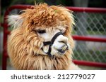 Funny Cute Alpaca With Long...