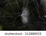 Spider's Web. Close Up