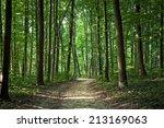 beautiful green forest | Shutterstock . vector #213169063