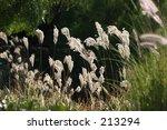 irvine  california   Shutterstock . vector #213294