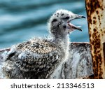 Seagull Nestling Sitting In Th...