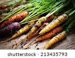 Fresh Rainbow Carrots Picked...
