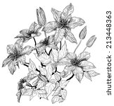 sketch of clematis flowers  | Shutterstock .eps vector #213448363