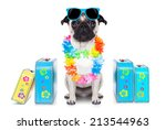 Pug Dog Looking So Cool With...