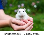 White Hamster With Black Eyes...