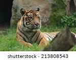 tiger. | Shutterstock . vector #213808543