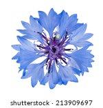 blue cornflower isolated on... | Shutterstock . vector #213909697