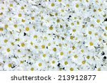 White Daisy Background Texture...