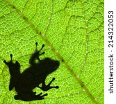 Frog Shadow Silhouette On The...
